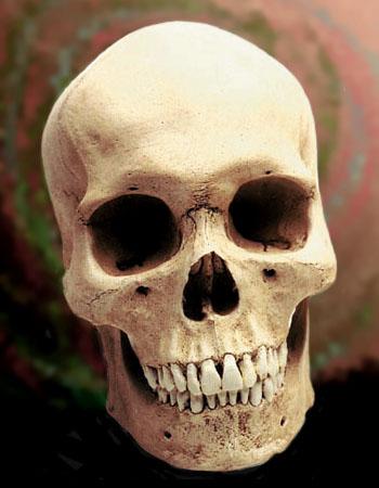 Human_male_skull